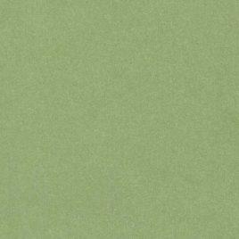 מארז 5 יחידות נייר ירוק טרופי חלק, 120 גרם, גודל 13X19 אינץ